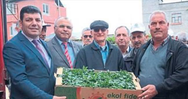 Mersin Büyükşehir'den domates fidesi