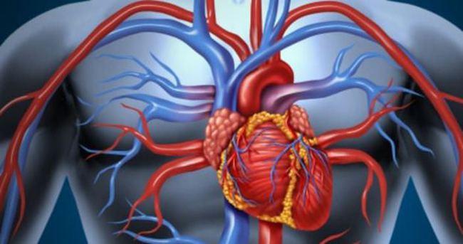 Aort damarı nerede?