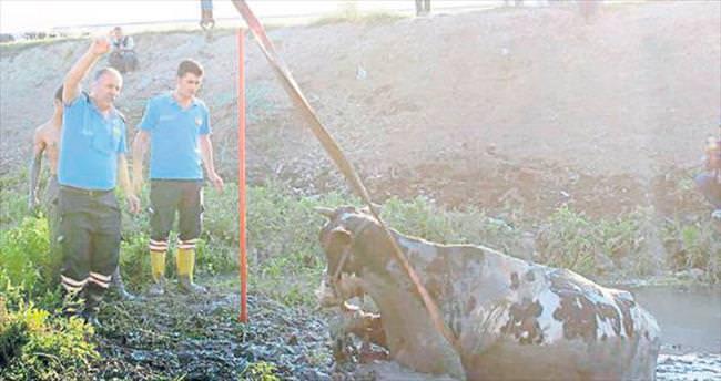 Mersin itfaiyesinin inek kurtarma operasyonu