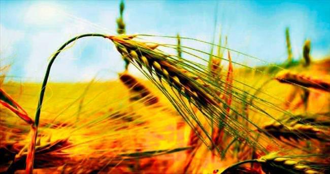 Genç çiftçilere 180 bin liralık kredi desteği