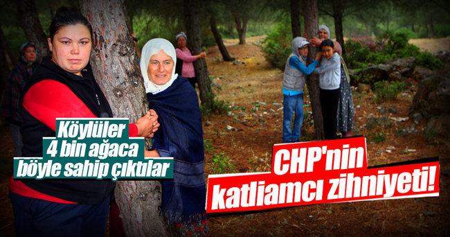 CHP'li belediyeye ağaç katliamı isyanı