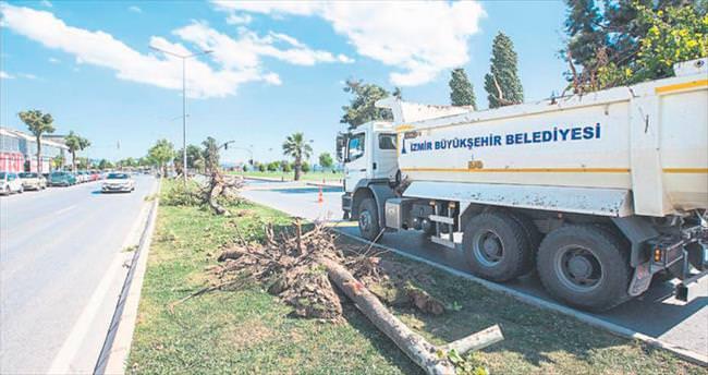 Ağaçlar tramvaya kurban