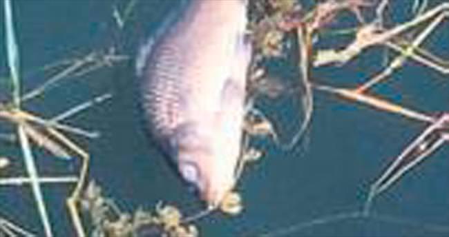 Balık ölümleri mercek altında