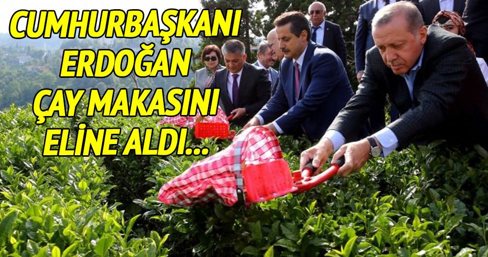Cumhurba�kan� Erdo�an �ay Bah�esine Girdi