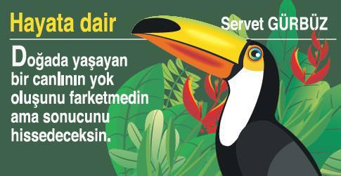 HayataDair