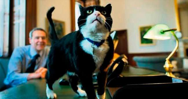 Kediye casus suçlaması