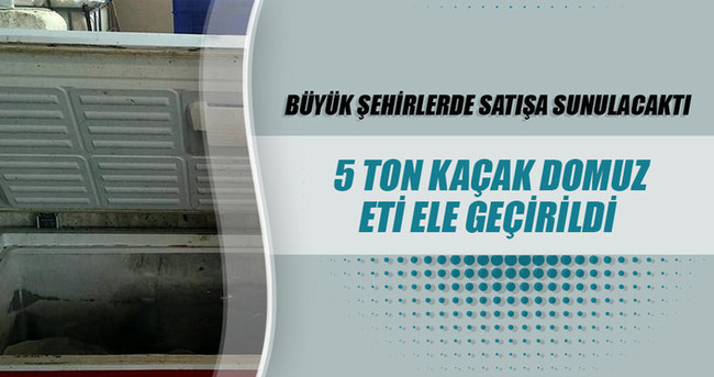 Aydın'da 5 ton kaçak domuz eti ele geçirildi