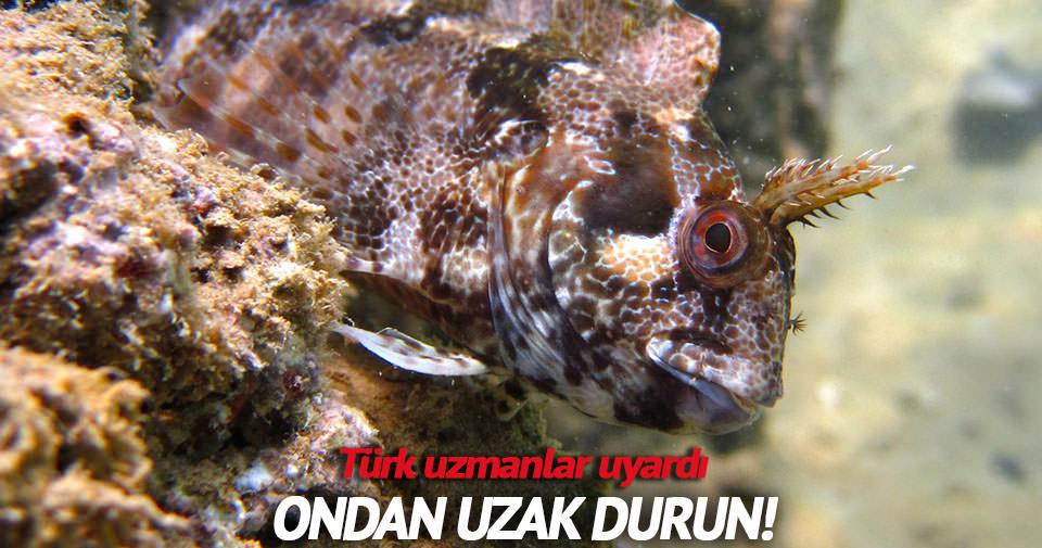 Horozbina balığında kist oluşturan parazit