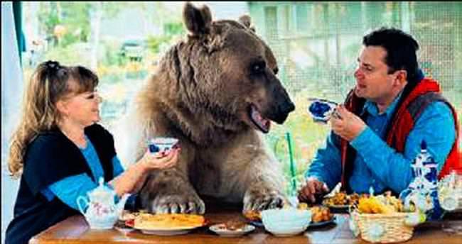 136 kg.'lık ayıyı evcilleştirdiler