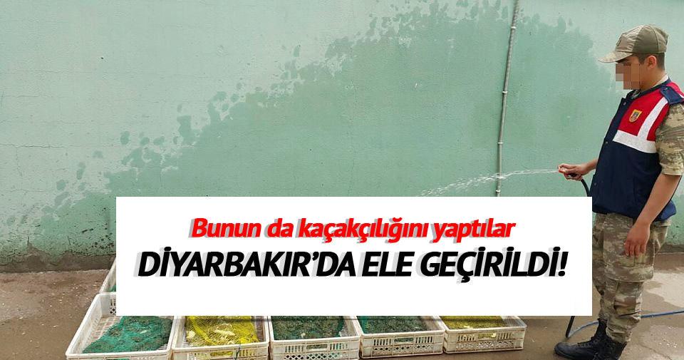 Diyarbakır'da canlı kurbağa avına darbe