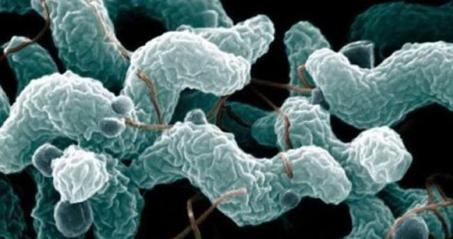 'Et yiyen bakteri Türkiye'ye yayılabilir'