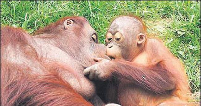 Annesini öpmeye doyamadı