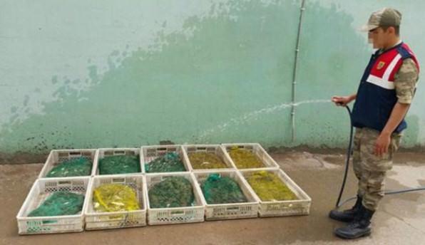 Kurbağa kaçakçılarına 204 bin 565 lira ceza