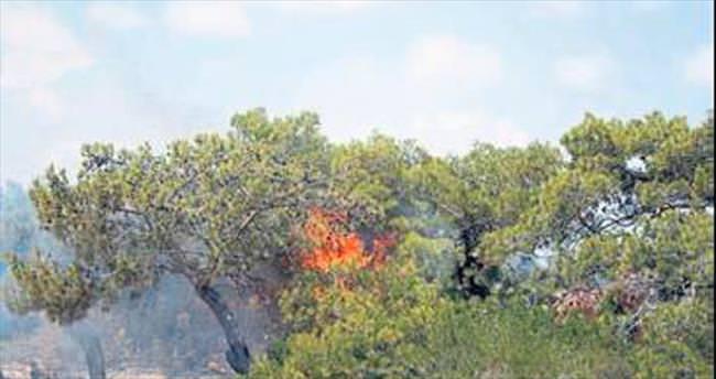 Orman yangını çamları kül etti