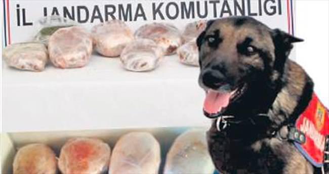 Baharatların arasındaki esrarı Cesur köpek buldu