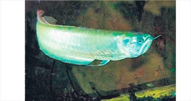 Kutsal balık Nata Vega Outlet'te