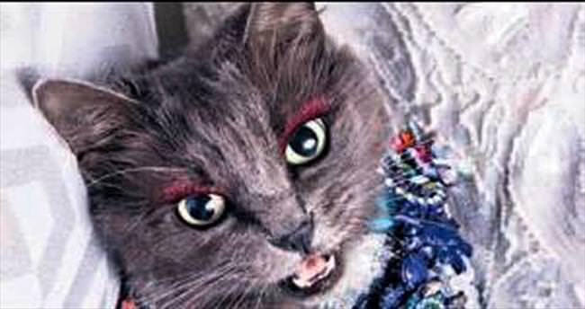 Instagram'ın ünlü kedisi Pitzush