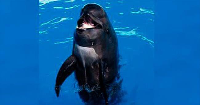 Meşhur balina 56'sında öldü