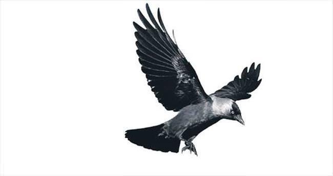 'Kuş beyinli' sözü tarihe karışıyor