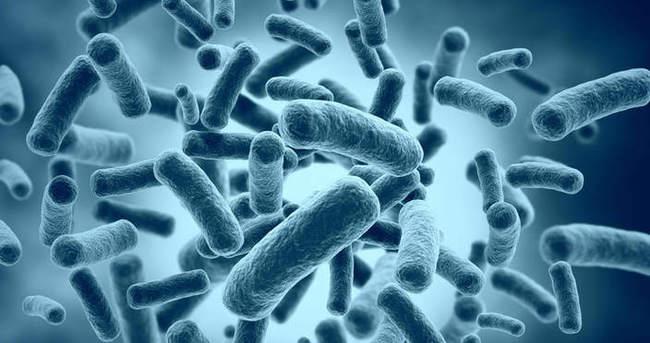 Bakterileri biyolojik sabit sürücüye dönüştürdüler