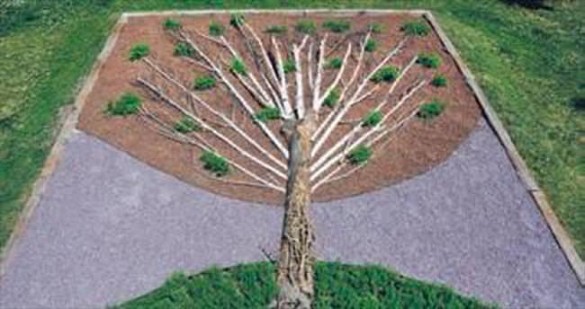 Kuruyan ağaçlar peyzajda kullanıldı