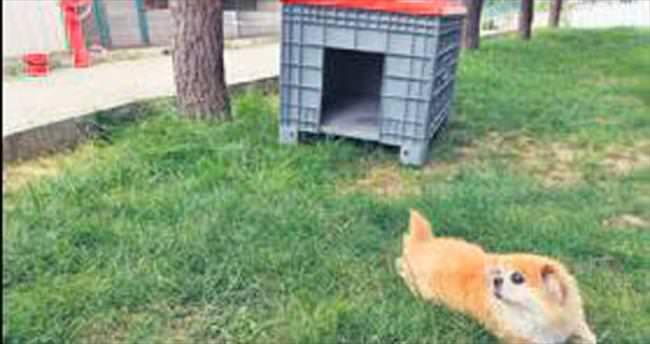 Yıldırım'da geri dönüşümle 20 köpek kulübesi yapıldı