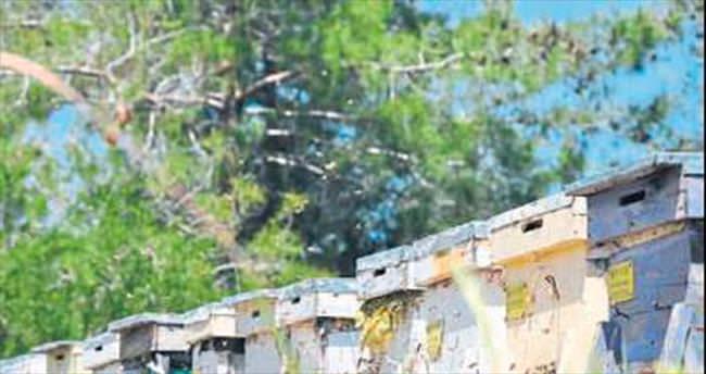 Manavgat'a bal ormanı kuruldu
