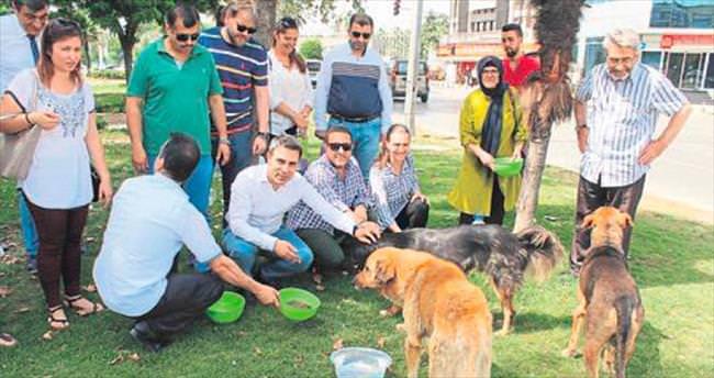 Sokak hayvanlarına merhamet hareketi