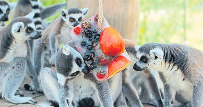 Meyveli dondurmayla serinlediler