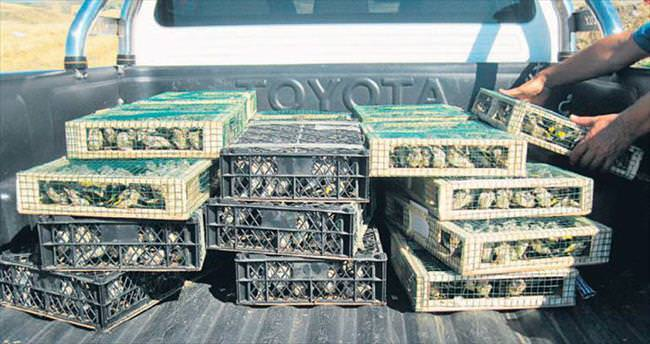 Kuş kaçakçısına 460 bin lira ceza