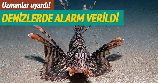 Akdeniz sularında aslan balığı alarmı