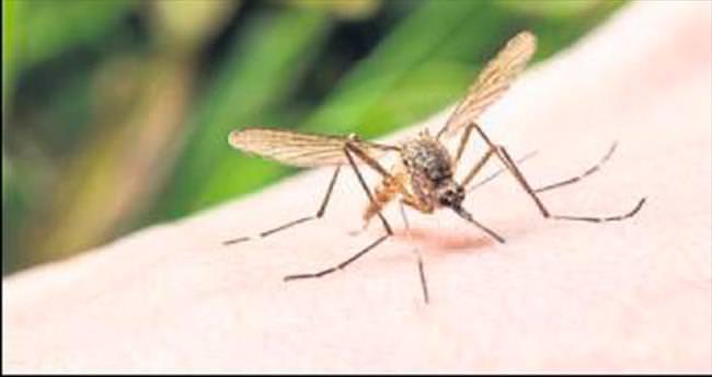 Melih ABİ: Başkan sivrisinekle ne zaman mücadele edecek?