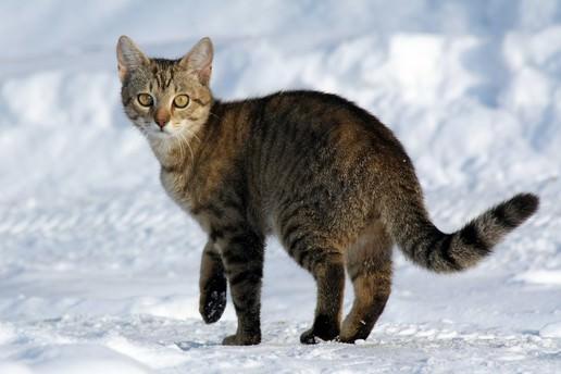ABD'de kedi katiline 4 yıl hapis cezası