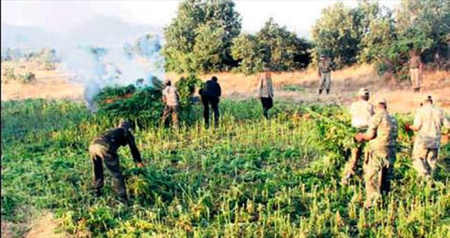 PKK'nın uyuşturucu tarlaları imha edildi
