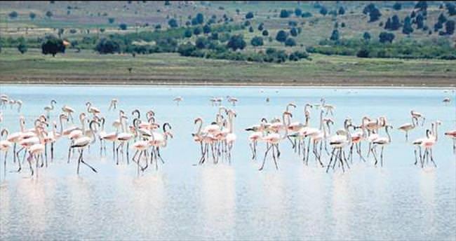 Yaralı flamingolar için doğal ortamda tedavi