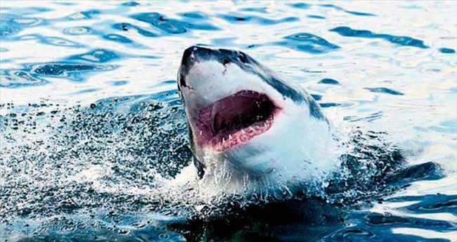 Sörf yapan çocuğa köpekbalığı saldırdı