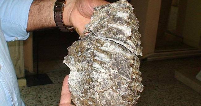 Konya'da mamut fosili bulundu