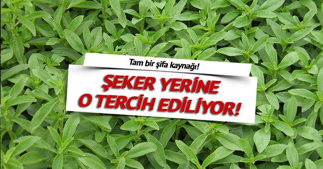 ŞEKER YERİNE O TERCİH EDİLİYOR!
