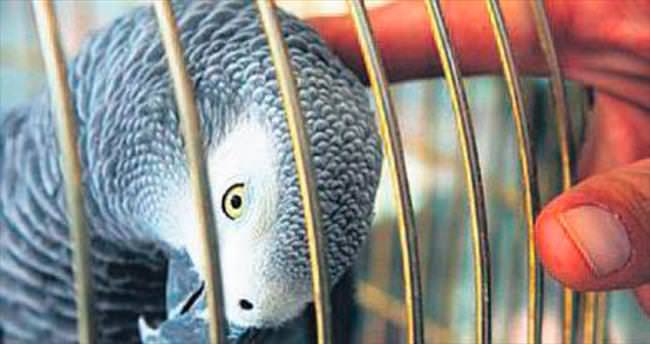 Bir papağanın sözleri delil kabul edilir mi?