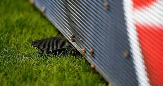 EURO 2016 finaline 'böcek saldırısı!