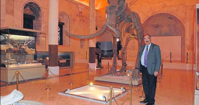 Tarihe ışık tutan Asya Fili kalıntısı
