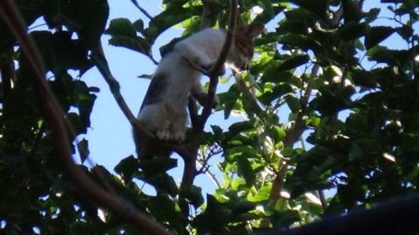 İtfaiye ekibinin kurtardığı kedi, yine ağaca çıkınca vatandaş indirdi