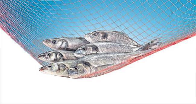 Haftada 2 gün balık hayat boyu sağlık