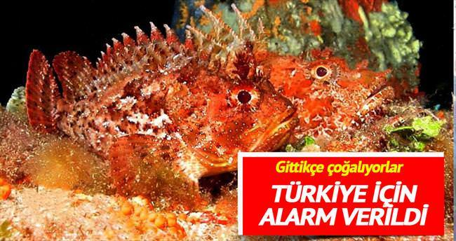 Türkiye ve Akdeniz için iskorpit alarmı