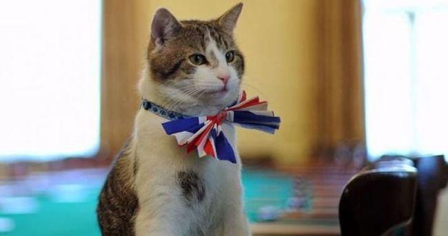 Başbakanlık konutunun kedisi görevde kalacak