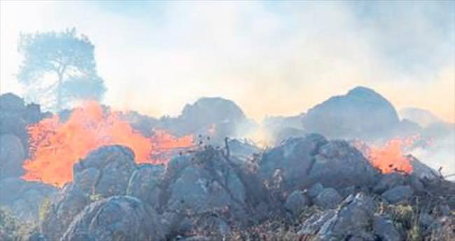 Serik'te 3 hektar alevlere teslim oldu