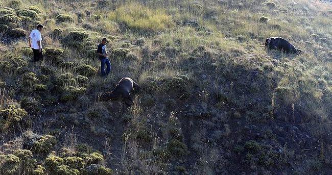 Yayladaki 9 at tüfekle öldürüldü