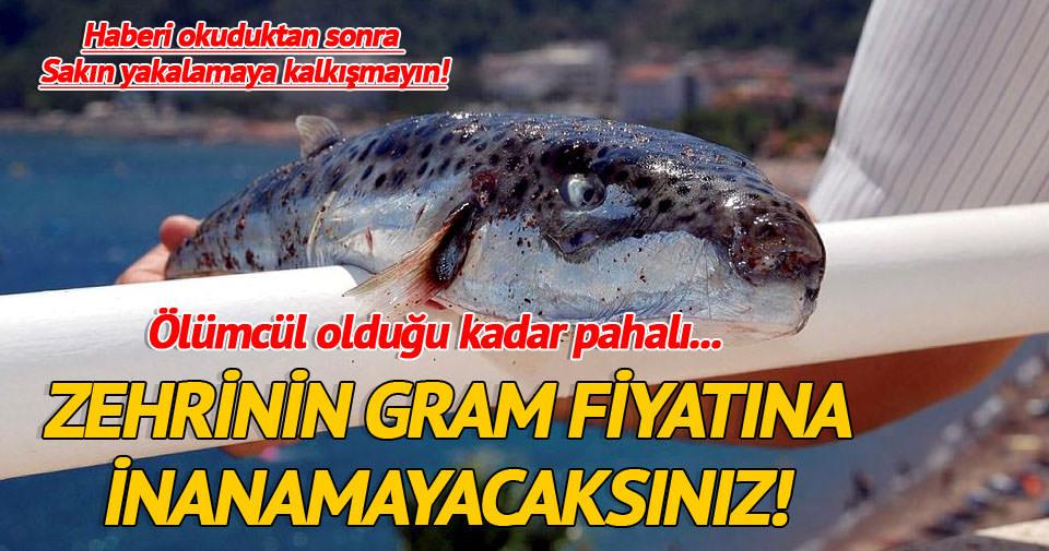 Balon balığı zehrinin 1 gramı 1 milyon Euro