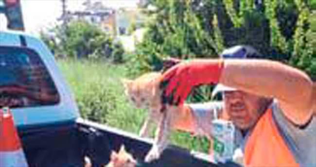 Dört yavru kediyi çuvala koyup attılar