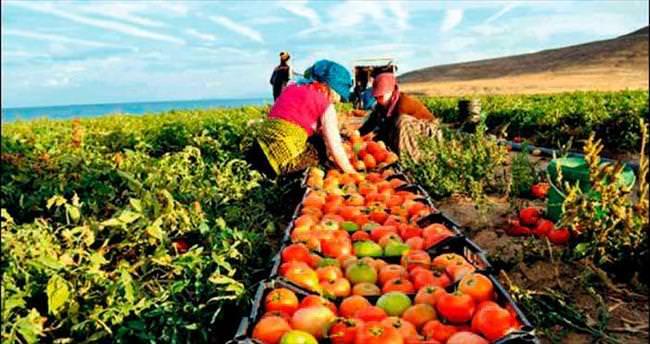 Rusya'dan tarıma ambargo kalkıyor